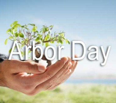 How To Celebrate Arbor Day
